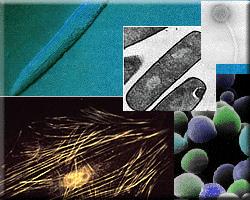 Nuevamente la nanotecnología